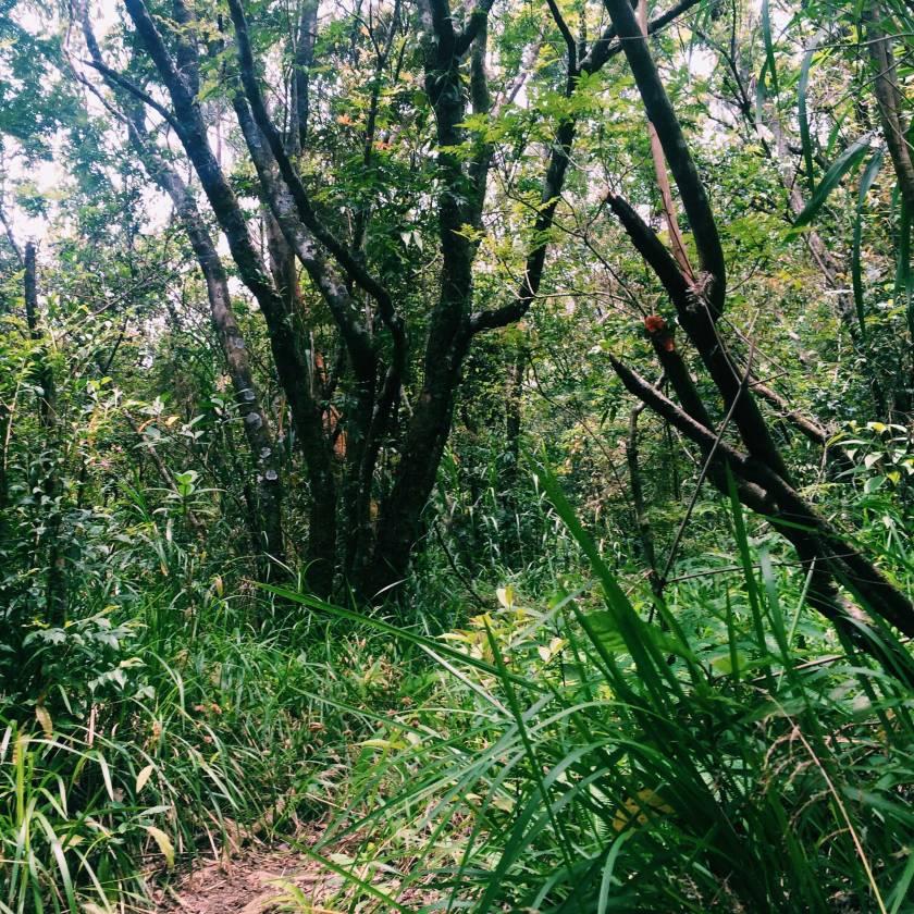 Mount-Mayon-(15)